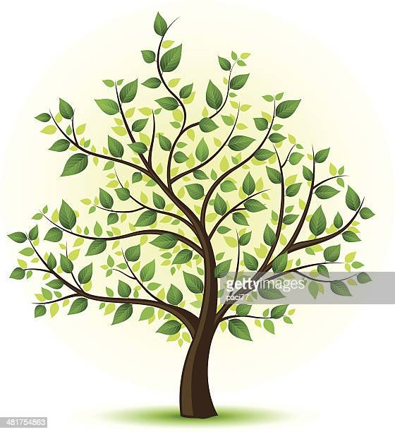 green tree illustration - tree trunk stock illustrations, clip art, cartoons, & icons
