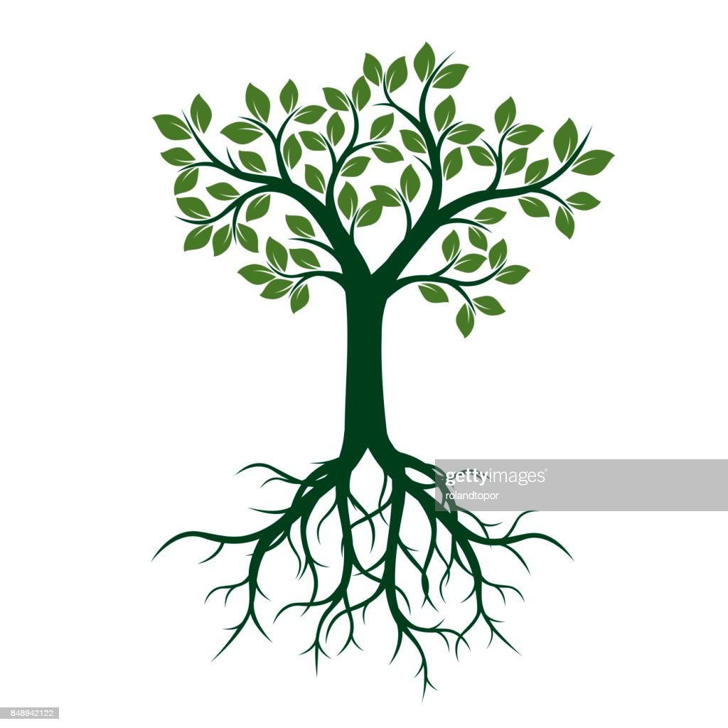 Green Tree with Leaves and Roots.