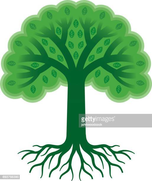 green tree with roots vector illustration - tree trunk stock illustrations, clip art, cartoons, & icons