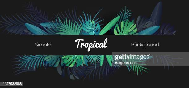 illustrazioni stock, clip art, cartoni animati e icone di tendenza di green tropical floral banner on black background - clima tropicale