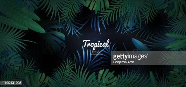 illustrations, cliparts, dessins animés et icônes de bannière florale tropicale verte sur le fond foncé - forêt pluviale