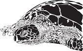 Green Turtle illustration B&W