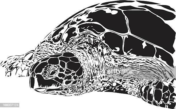 green turtle illustration b&w - green turtle stock illustrations, clip art, cartoons, & icons