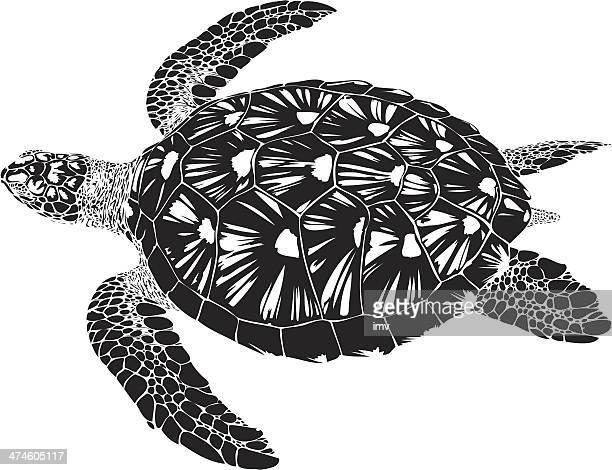 green turtle swimming b&w - sea turtle stock illustrations