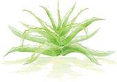 Green watercolor aloe bush