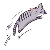Grey cat jumping