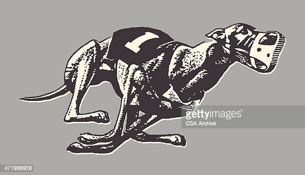 ilustraciones, imágenes clip art, dibujos animados e iconos de stock de greyhound carreras de galgos - galgo