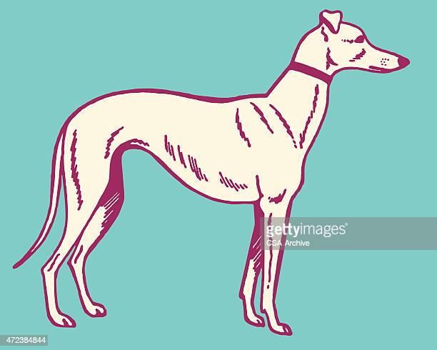 ilustraciones, imágenes clip art, dibujos animados e iconos de stock de greyhound perro - galgo