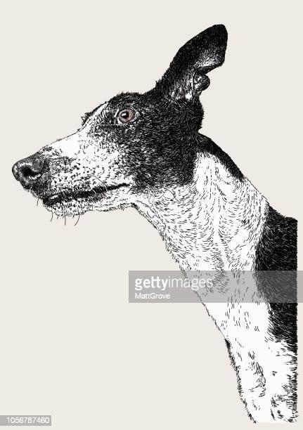 ilustraciones, imágenes clip art, dibujos animados e iconos de stock de greyhound - galgo