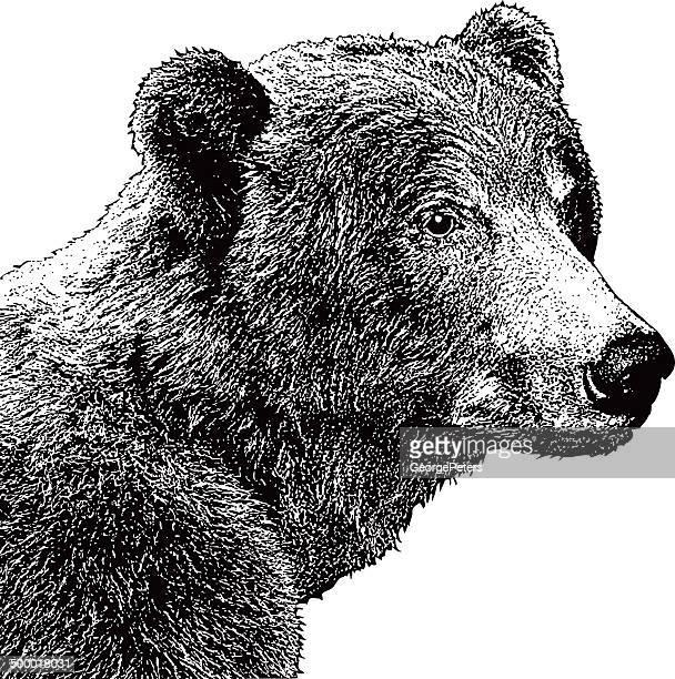 Grizzly Bear Mezzotint