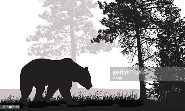 ilustraciones, imágenes clip art, dibujos animados e iconos de stock de grizzlylife - oso pardo