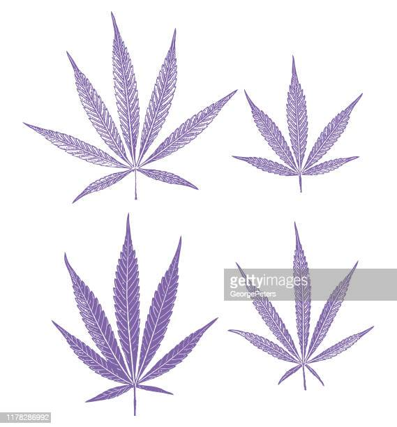 1 656 Cannabis Plant High Res Illustrations Getty Images