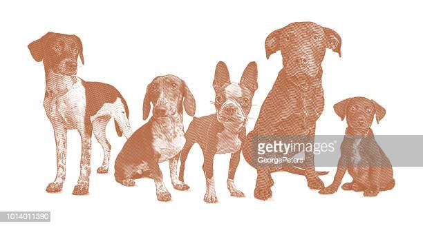 Group of 5 dogs in animal shelter