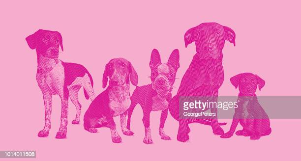 group of 5 dogs in animal shelter - group of animals stock illustrations, clip art, cartoons, & icons