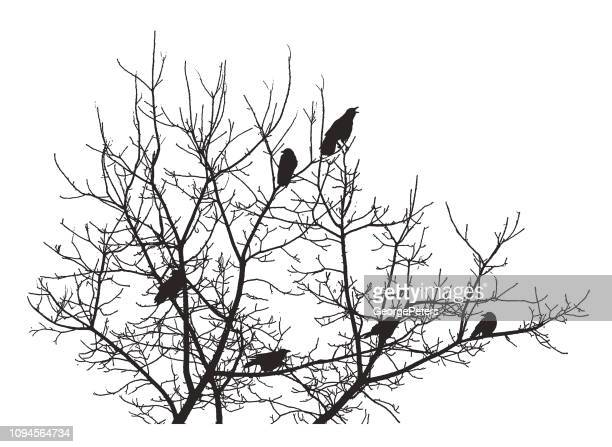 group of crows perching in a tree - crow bird stock illustrations