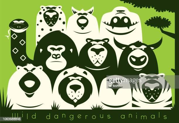 group of dangerous wild animals gathering - bull animal stock illustrations