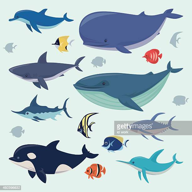 group of sea creatures - killer whale stock illustrations, clip art, cartoons, & icons