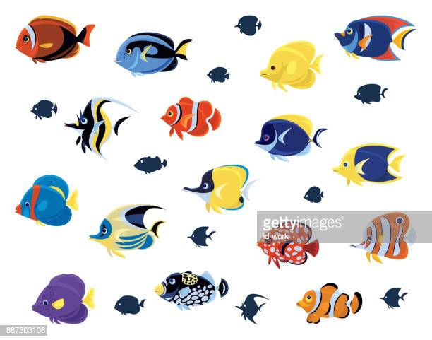 group of tropical fishes - acanthuridae stock illustrations, clip art, cartoons, & icons