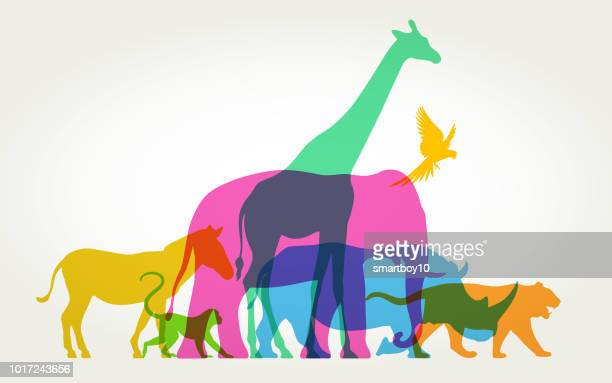 illustrazioni stock, clip art, cartoni animati e icone di tendenza di group of wild animals - animal