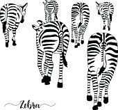 Group of zebras, pose from the back.