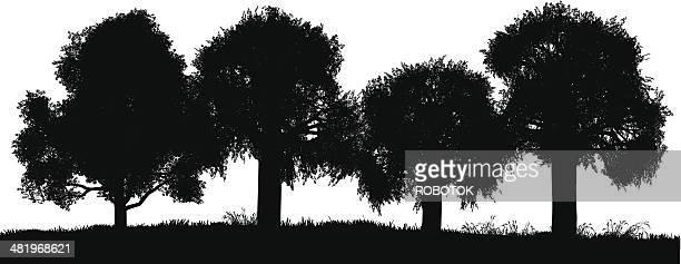 grove - grove stock illustrations, clip art, cartoons, & icons
