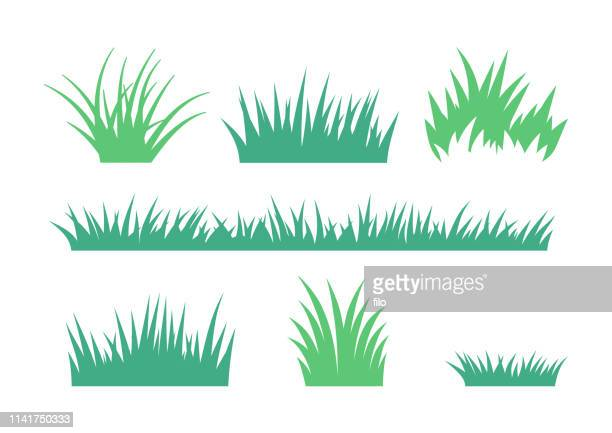 growing grass and cultivated lawn silhouettes and symbols - {{ collectponotification.cta }} stock illustrations
