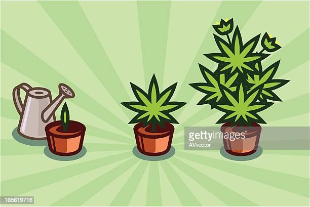 成長の芝生 - 合法化点のイラスト素材/クリップアート素材/マンガ素材/アイコン素材