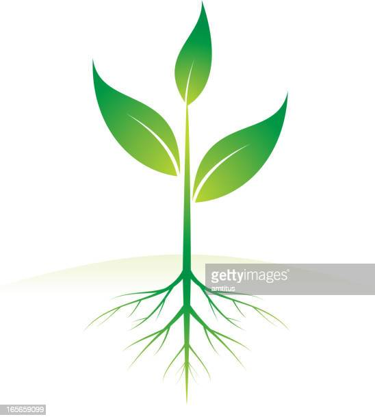 growing plant - root stock illustrations, clip art, cartoons, & icons