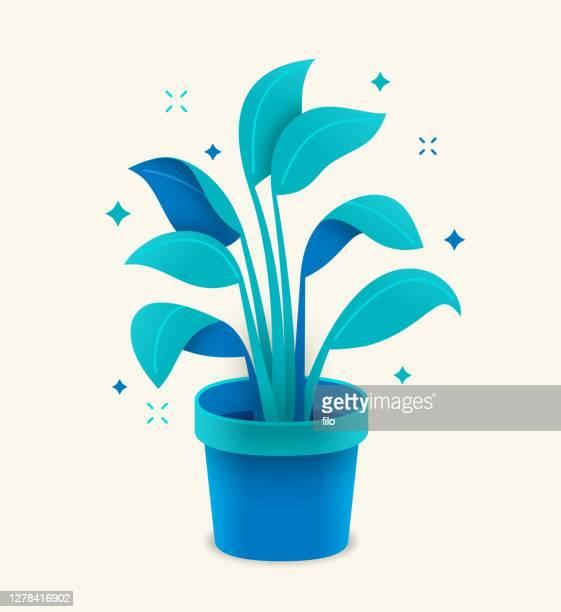 ilustrações, clipart, desenhos animados e ícones de planta de potted em crescimento - produto local