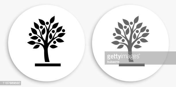 growing tree black and white round icon - tree stock illustrations