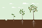 Growing Tree Illustration