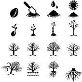 Growing Tree Process black & white vector icon set