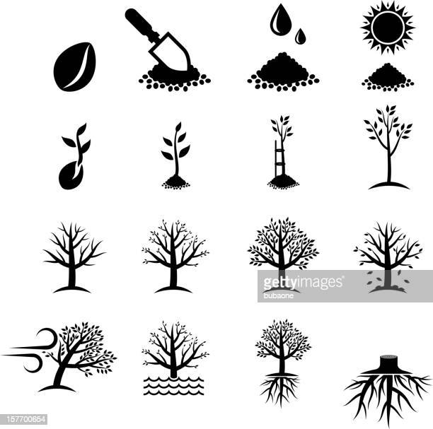 Growing Tree Process black & white vector icon set