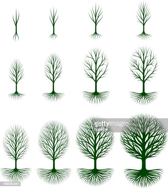 growing tree royalty free vector icon set - root stock illustrations, clip art, cartoons, & icons