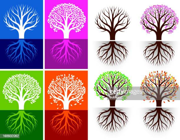 growing tree seasonal royalty free vector icon set with colors - bare tree stock illustrations