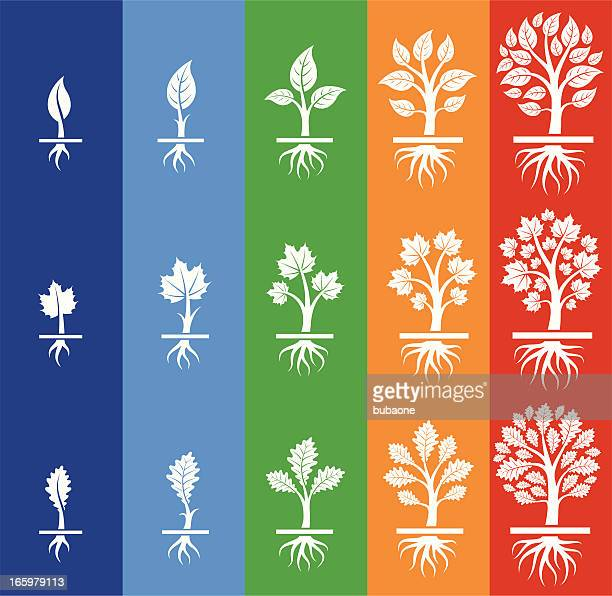 growing tree seasonal royalty free vector icon set with colors - root stock illustrations, clip art, cartoons, & icons