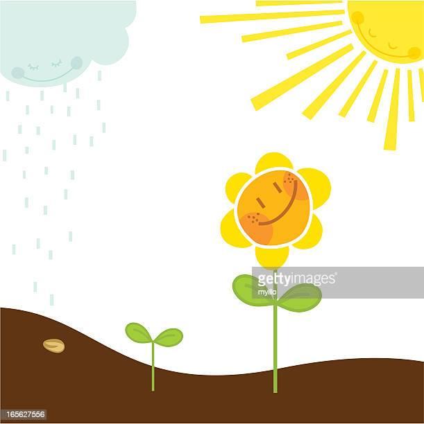 ilustraciones, imágenes clip art, dibujos animados e iconos de stock de crecimiento (naturaleza serie - girasol