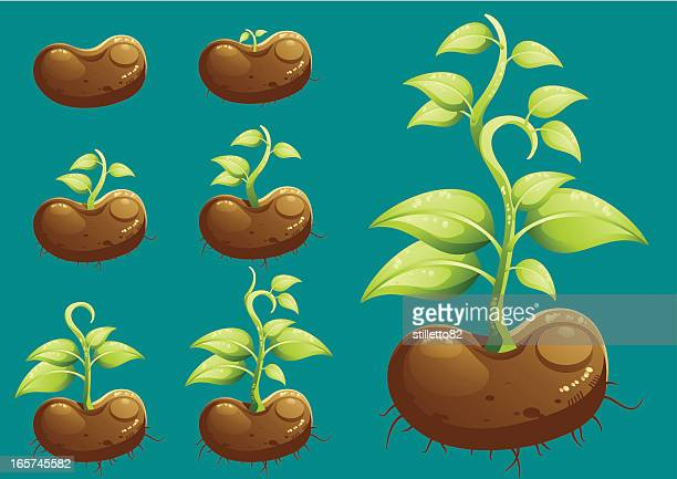 growing - bean stock illustrations, clip art, cartoons, & icons