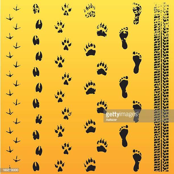grunge animal track evolution - bear tracks stock illustrations