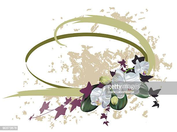 43 胡蝶蘭 Stock Illustrations Clip Art Cartoons Icons Getty Images