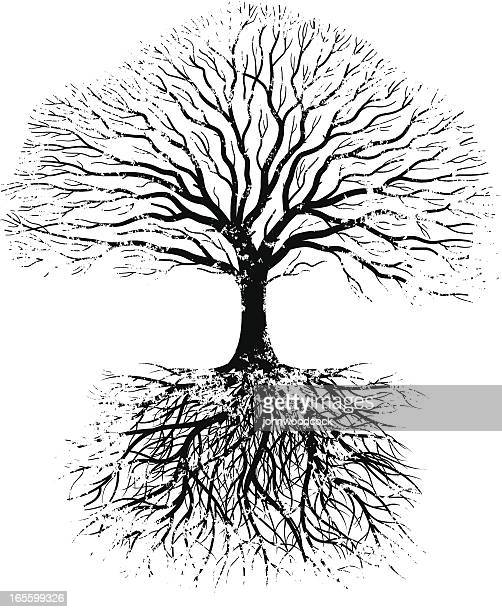 grunge real tree - root stock illustrations, clip art, cartoons, & icons
