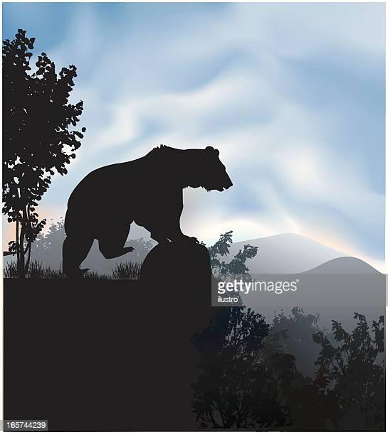 Grzli bear in the wild
