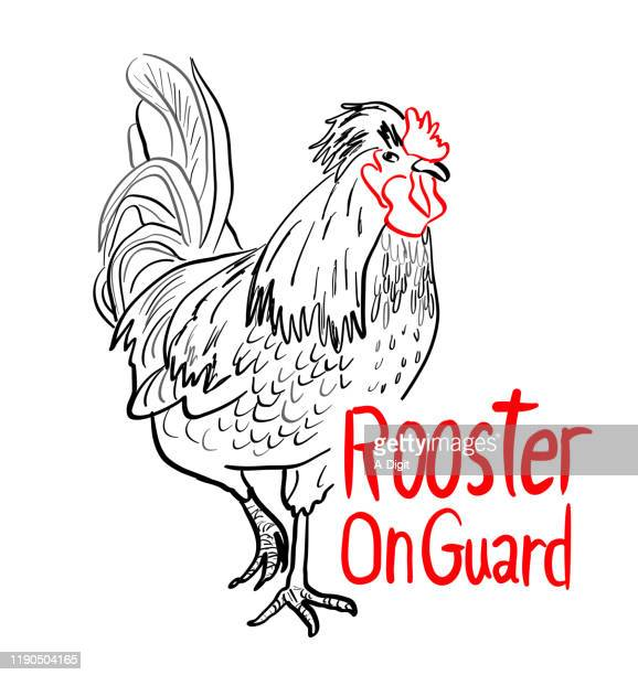 guard rooster - private property stock illustrations