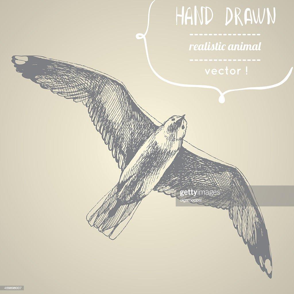 Gull. Hand drawn vector illustration.