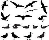 Gulls silhouette