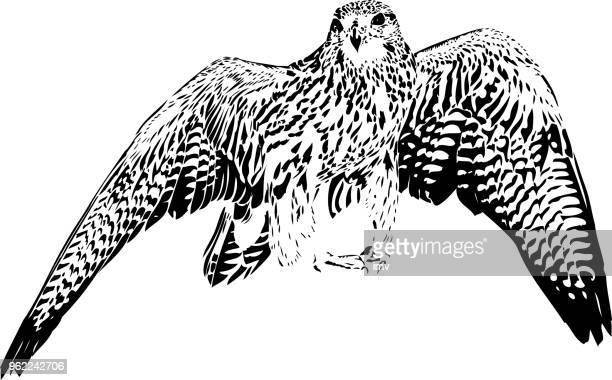 gyrfalcon illustration in black lines - falcons stock illustrations, clip art, cartoons, & icons