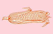 Half-Shucked Ear of Corn