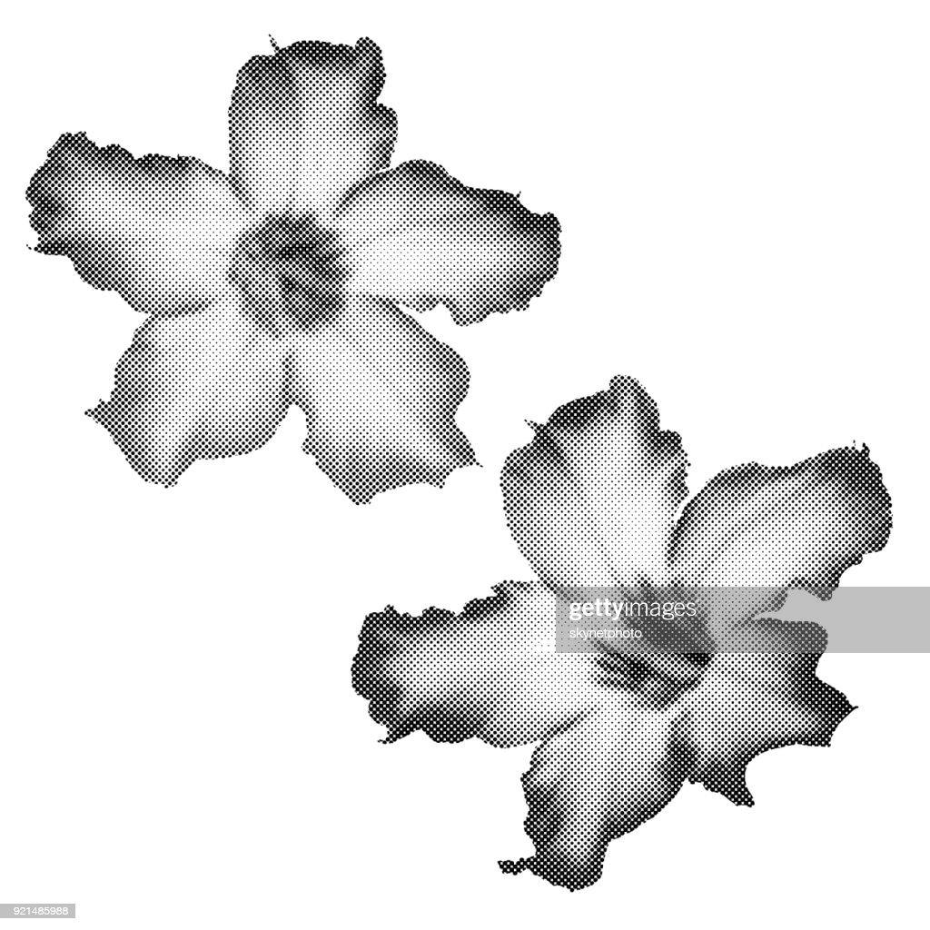 Halftone effect of Desert Rose Flower