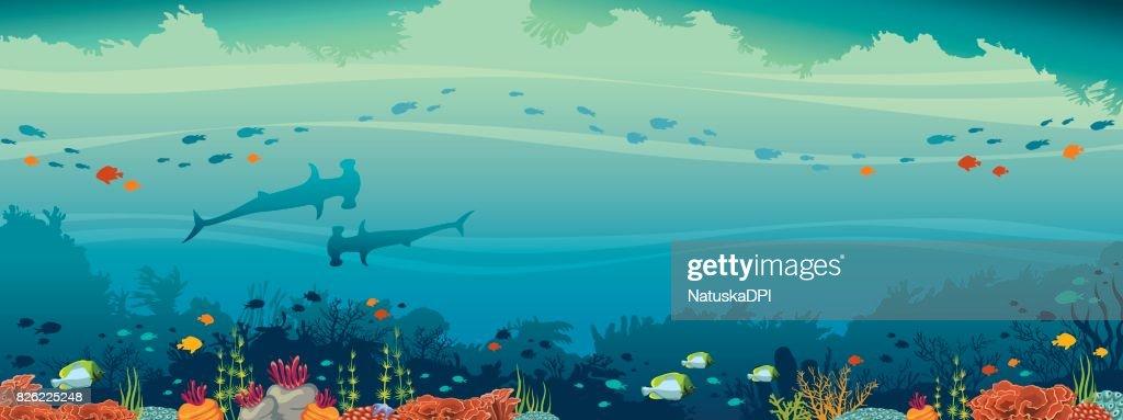 Hammerhead shark, fish, coral reef, underwater sea.
