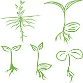 Hand draw Sprouts plants seeding. vector  illustrations EPS10